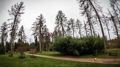 LR6-1226093-web (David Norfolk) Tags: olympus penf trees 8mm f18 fisheye