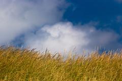 Blue (ulbespaans) Tags: landscape landscapephotography less lessismore minimalism bluesky clouds cloudy minimalist minimalphotography minimalmood blue grass