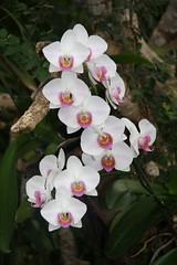 Colores en la naturaleza (JAAB68) Tags: naturaleza flores colores vida