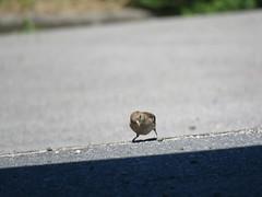 IMG_6372 (jesust793) Tags: pájaros birds naturaleza nature