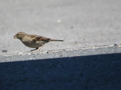 IMG_6371 (jesust793) Tags: pájaros birds naturaleza nature