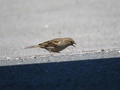 IMG_6370 (jesust793) Tags: pájaros birds naturaleza nature