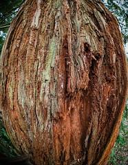 LR6-1226079-web (David Norfolk) Tags: olympus penf trees 8mm f18 fisheye