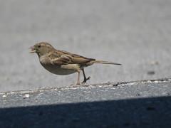 IMG_6368 (jesust793) Tags: pájaros birds naturaleza nature