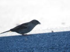 IMG_6366 (jesust793) Tags: pájaros birds naturaleza nature