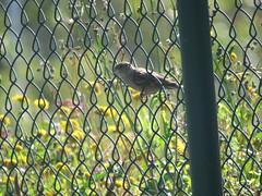 IMG_6307 (jesust793) Tags: pájaros birds naturaleza nature