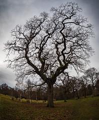 LR6-1226082-web (David Norfolk) Tags: olympus penf trees 8mm f18 fisheye