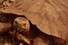 Tú que miras (juanmerkader) Tags: cantabria españa naturaleza nikond7100 picture spain travel viaje animals nature nikon penagos