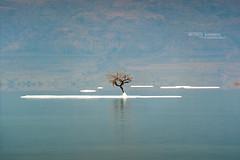 Dead sea (Matthieu Berroneau) Tags: trip paysage mer morte israël dead sea deadsea mermorte landscape