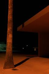 One palm, Twentynine Palms (ADMurr) Tags: california 29 palms twentyninepalms night leica m240 35mm zeiss zm f28 m0004634