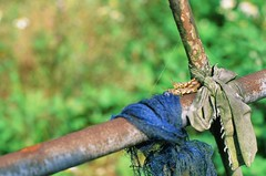 Bird and bees do it (ross.mccarry) Tags: taipei taiwan fuji 35mm film velvia kodak ektar asia nikon voigtlander 58mm