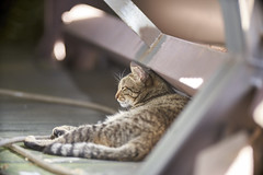 A7R3__DSC4030_C1 (Bazoka+Cynthia) Tags: cat shinjichen 小婆 新北市 牧耘菲 猴硐 瑞芳區 簡小咪 貓