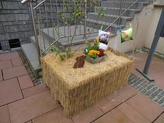 decoracion conejo en mesa de paja Clervaux Luxemburgo 03 (Rafael Gomez - http://micamara.es) Tags: decoracion conejo en mesa de paja clervaux luxemburgo