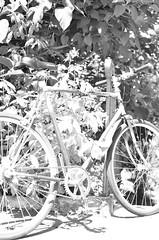Urban SingleSpeed Toulouse 35 (EL JOKER) Tags: bike velo blue black france green bicycle wheel yellow by speed jaune french one nc rust noir ss creative gear commons vert chain bleu cc single singlespeed fixie mbk sa toulouse fr 1979 chaine motobecane roue rouille 2018 occitanie shadow urban white wall les army nikon el prods ombre joker rap nikkor simple 35 mur blanc armee urbain pigon 2019 d7000 allummers