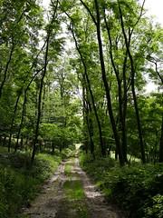 Chemins après la pluie (Altair2134) Tags: chemin