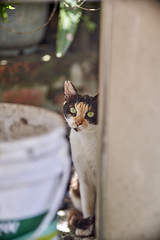 A7R3__DSC4042_C1 (Bazoka+Cynthia) Tags: cat shinjichen 小婆 新北市 牧耘菲 猴硐 瑞芳區 簡小咪 貓