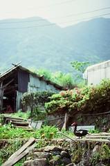Mountain duck (ross.mccarry) Tags: taipei taiwan fuji 35mm film duck velvia kodak ektar asia nikon voigtlander 58mm