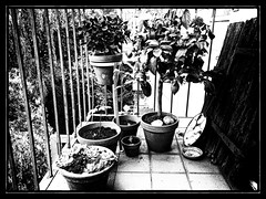 my little garden (j.p.yef) Tags: peterfey jpyef yef monochrome bw sw balkony plants germany hamburg iphone photomanipulation