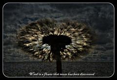 Discovered (patrick.verstappen) Tags: sweet test tag textured yahoo gingelom google flickr facebook barbie sale xxx nikon canon sony loaf leaf seed high jumnk grass best sold fun code d5100 texture twitter textura sun rêve garden garten ipernity ipiccy imagine inspiration photo picassa pinterest belgium ☺ ♥ tea flower sky cherish sherry blossem spring limburg patrick verstappen bélgica sigma dogsrose herbes texturé texturizado texturised texturing cloudy text field sunset horseflower weed