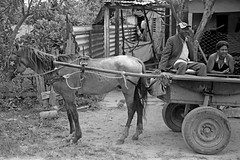 Pinar Del Rio Transport (peterkelly) Tags: digital bw northamerica canon 6d cuba cubalibre gadventures pinardelrio state horse cart star couple wheel rural
