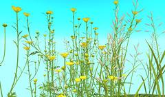 Heart Wild Flowers (Lilith Heart) Tags: secondlife secondlifelandscaping secondlifeforest secondlifeflowers lilithheart heartgardencentre heartbotanicals virtualworld virtualplants vr ar