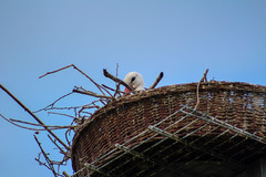 stork (Enzo_MG) Tags: stork cicogna nature natura bird uccello nido nest
