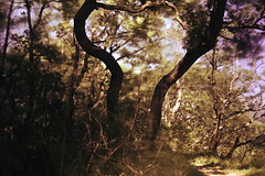Simmetry (Mi-Fo-to) Tags: long exposure lunga esposizione simmetria simmetry piante plants trees branches rami vegetazione movimento blur sfocato natura nature paesaggio dipinto painted landscape nd rokkor 2 40 dsc3168 no retouch