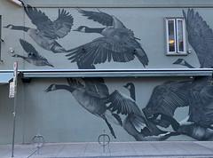 Canada Geese Mural.jpg (remiklitsch) Tags: mural street streetart toronto ontario canada to gratitude yorkville iphone remiklitsch