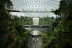 20190616-DSC05544 (Inno'vision) Tags: jewel changiairport jewelchangi indoor garden rainvortex canopypark singapore scape waterfall