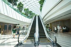 20190616-DSC05750 (Inno'vision) Tags: jewel changiairport jewelchangi indoor garden rainvortex canopypark singapore scape waterfall