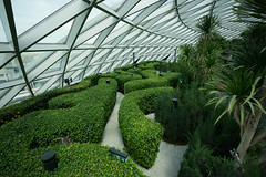 20190616-DSC05843 (Inno'vision) Tags: jewel changiairport jewelchangi indoor garden rainvortex canopypark singapore scape waterfall
