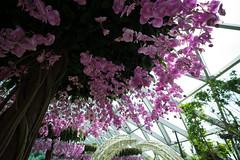 20190616-DSC05940 (Inno'vision) Tags: jewel changiairport jewelchangi indoor garden rainvortex canopypark singapore scape waterfall