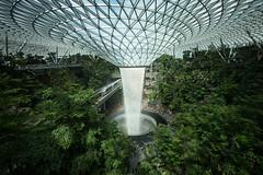 20190616-DSC05931 (Inno'vision) Tags: jewel changiairport jewelchangi indoor garden rainvortex canopypark singapore scape waterfall