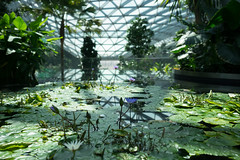 20190616-DSC05893 (Inno'vision) Tags: jewel changiairport jewelchangi indoor garden rainvortex canopypark singapore scape waterfall