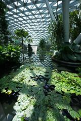20190616-DSC05892 (Inno'vision) Tags: jewel changiairport jewelchangi indoor garden rainvortex canopypark singapore scape waterfall