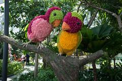 20190616-DSC05871 (Inno'vision) Tags: jewel changiairport jewelchangi indoor garden rainvortex canopypark singapore scape waterfall