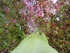 IMG_1975 (belight7) Tags: tree light leaves uk england nature