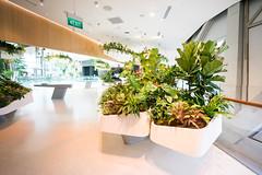 20190616-DSC05578 (Inno'vision) Tags: jewel changiairport jewelchangi indoor garden rainvortex canopypark singapore scape waterfall