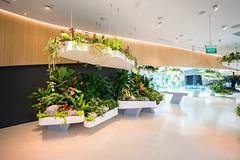 20190616-DSC05577 (Inno'vision) Tags: jewel changiairport jewelchangi indoor garden rainvortex canopypark singapore scape waterfall