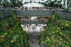 20190616-DSC05807 (Inno'vision) Tags: jewel changiairport jewelchangi indoor garden rainvortex canopypark singapore scape waterfall