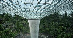20190616-DSC05783 (Inno'vision) Tags: jewel changiairport jewelchangi indoor garden rainvortex canopypark singapore scape waterfall