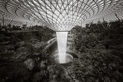20190616-DSC05931-2 (Inno'vision) Tags: jewel changiairport jewelchangi indoor garden rainvortex canopypark singapore scape waterfall