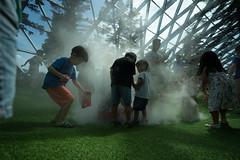 20190616-DSC05913 (Inno'vision) Tags: jewel changiairport jewelchangi indoor garden rainvortex canopypark singapore scape waterfall