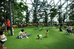 20190616-DSC05907 (Inno'vision) Tags: jewel changiairport jewelchangi indoor garden rainvortex canopypark singapore scape waterfall