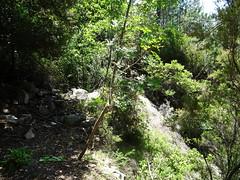 Operata1906160023 (Corse sauvage) Tags: operata opération operatadu16062019 peralzone cascade cascadeduperalzone paliri chemindepaliri tronçonhistorique démaquisage tronçonneuse nettoyage