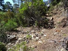 Operata1906160002 (Corse sauvage) Tags: operata opération operatadu16062019 peralzone cascade cascadeduperalzone paliri chemindepaliri tronçonhistorique démaquisage tronçonneuse nettoyage