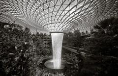 20190616-DSC05529-2 (Inno'vision) Tags: jewel changiairport jewelchangi indoor garden rainvortex canopypark singapore scape waterfall