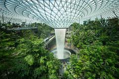 20190616-DSC05927 (Inno'vision) Tags: jewel changiairport jewelchangi indoor garden rainvortex canopypark singapore scape waterfall