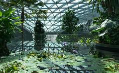 20190616-DSC05894 (Inno'vision) Tags: jewel changiairport jewelchangi indoor garden rainvortex canopypark singapore scape waterfall