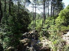 Operata1906160009 (Corse sauvage) Tags: operata opération operatadu16062019 peralzone cascade cascadeduperalzone paliri chemindepaliri tronçonhistorique démaquisage tronçonneuse nettoyage